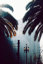 Palm Trees In Downtown San Francisco