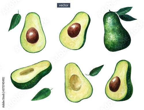Leinwand Poster Vector watercolor set of ripe avocado isolated on white background