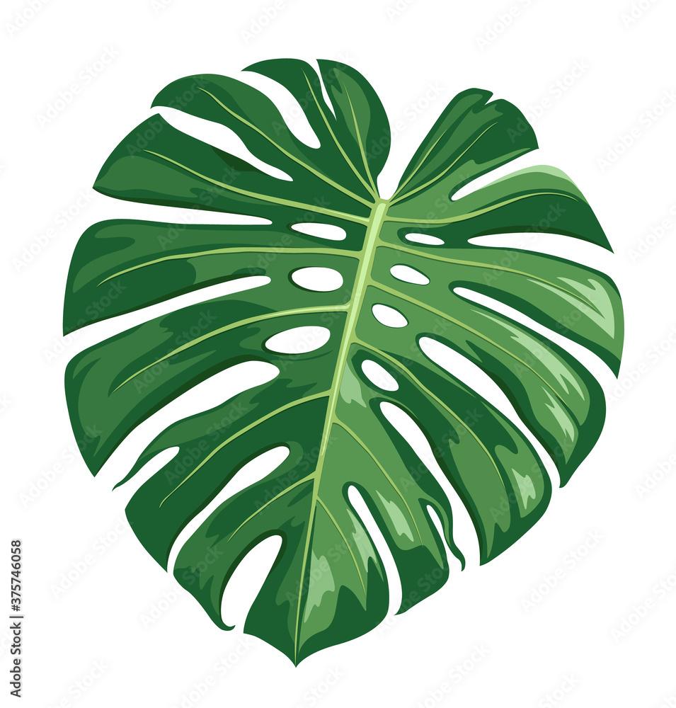 Fototapeta Monstera Deliciosa leaf vector, realistic design isolated on white background, Eps 10 illustration