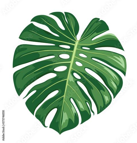 Monstera Deliciosa leaf vector, realistic design isolated on white background, E Canvas