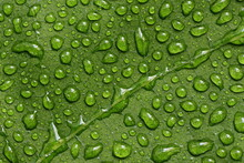 Raindrops On A Fig Leaf