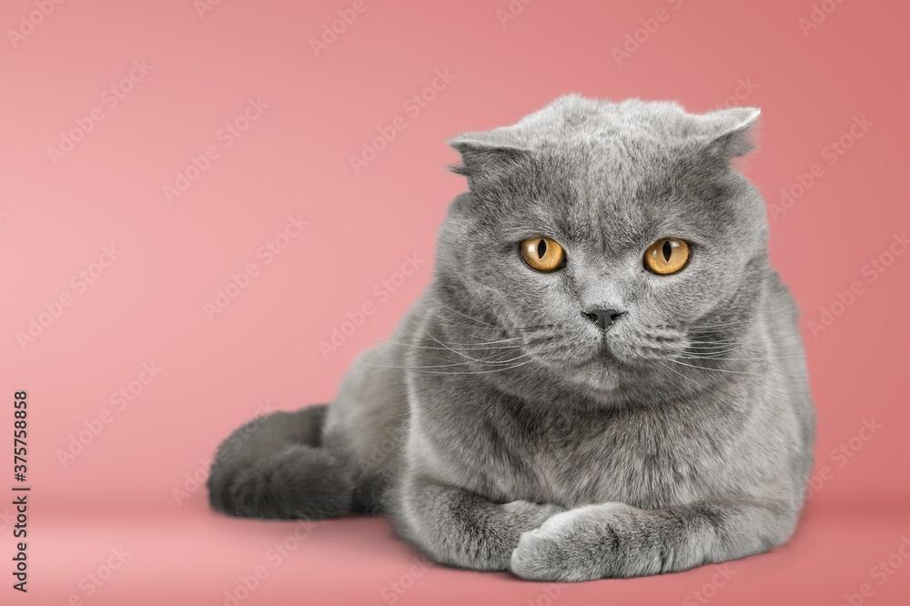 Fototapeta Cat.
