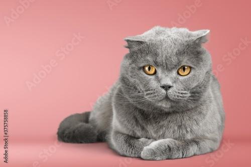 Fototapeta Cat. obraz