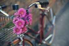Bike With Pink Zinnia Flowers In The Basket