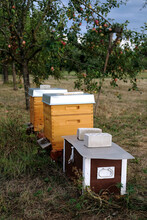 Vertical Shot Of Artificial Beehives Near The Trees In A Garden