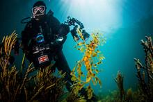 Photographer And Leafy Sea Dragon