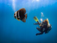 Diver Met A Large Spade Fish I...