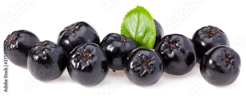 Chokeberry with green leaves isolated on white background Fototapet