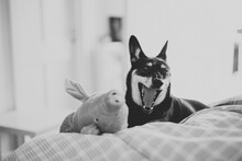 Little Dog Yawning In Black And White