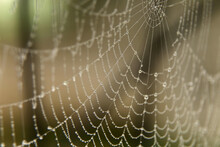 Morning Dew On The Web