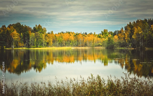 Fototapety, obrazy: Beautiful shot of a pond surrounded by trees in autumn day