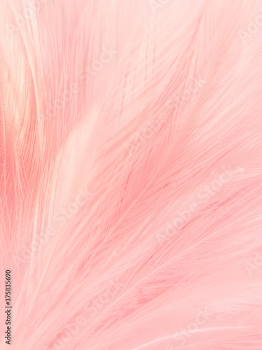 Beautiful abstract gray and pink feathers on white background, white feather fra Canvas