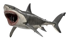 3d Rendered Great White Shark
