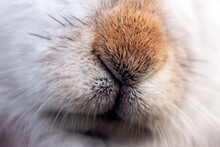 Mountain Hare In The Scottish Highlands.