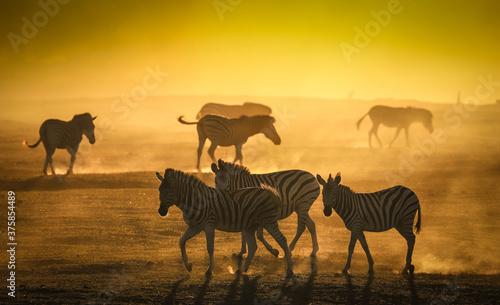 Foto Zebra Silhouette herd