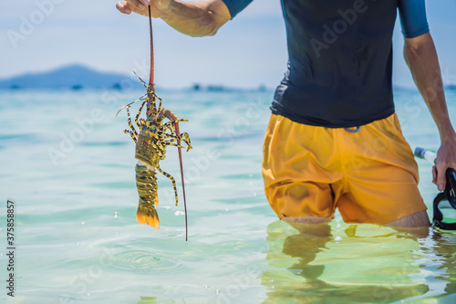 Foto Lobster in the hands of a diver