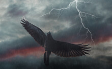 Black Raven Spreading Its Wings Flies Into A Storm Against The Background Of Lightning