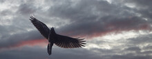 Raven Flies On A Gloomy Sky At...