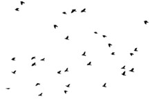 Flock Of Birds Flying Silhouet...