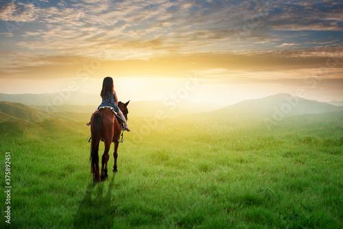 Fotografija horse in the field