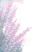 Corner Bouquet Of  Outline Heather Or Calluna Flower With Bud And Leaves In Pastel Pink On The White Background.