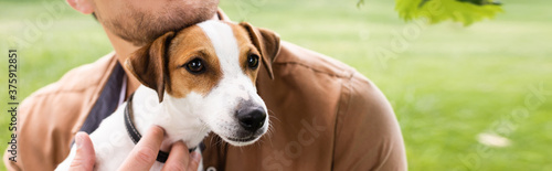 Obraz na plátne partial view of man holding white jack russell terrier dog with brown spots on h