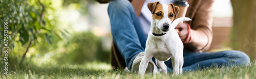 Fototapeta cropped view of man sitting on lawn near white jack russell terrier dog with bro