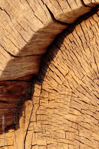 Fototapeta Martwe drewno obraz