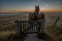 Horses Standing At A Gate A Mi...