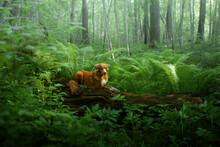 Dog In The Fern. Nova Scotia D...