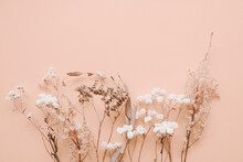 Romantic Dried Flowers On Pink Background.