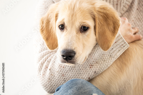 Foto Female hand hugging calm golden retriever dog