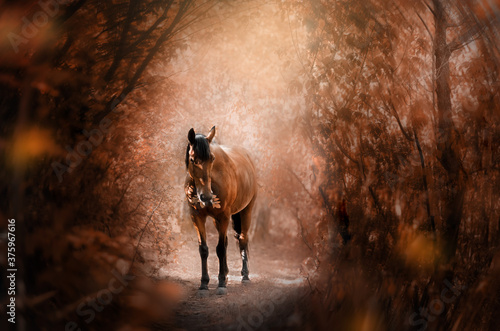 Obraz na plátne gorgeous autumn portrait of a chestnut horse magic light dawn