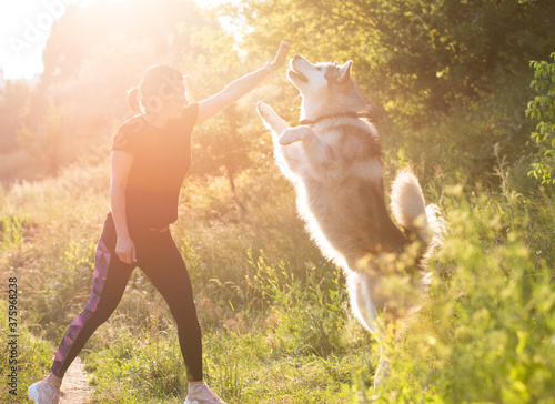 Fotografie, Obraz Woman training domestic dog to stand on hind legs outdoors