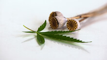 Close-up Of A Poppy Composition. A Beautiful, Textured Look Of Dry Poppy.Poppy Seed Boxes.Hemp Leaves With Dead Poppy.