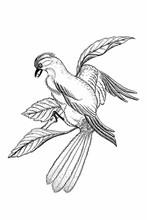 Illustration Oiseau