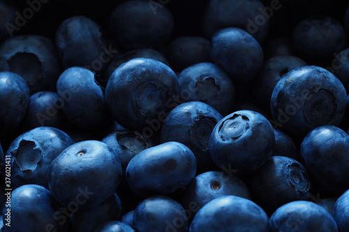 Blueberries abound as texture and background Canvas Print