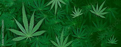 Marijuana leaf, green color background Billede på lærred