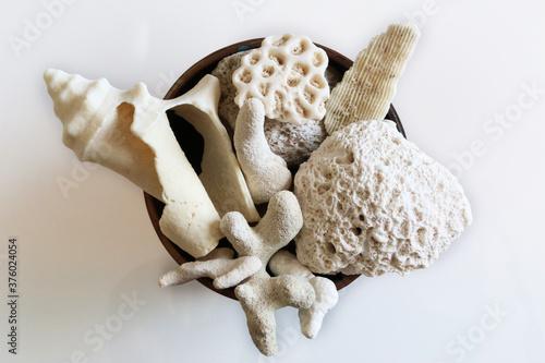 Meraviglie della natura: piccola collezione di conchiglie e coralli provenienti da una spiaggia tropicale, su fondo bianco Fototapet