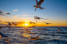 Many Seagulls Flying Over Ocea...
