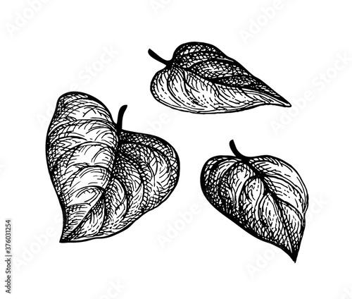 Fényképezés Ink sketch of heart shaped leaves.