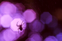 A Spider Sits In Its Web, Spider And Cobweb Abstract, Colorful, Cobweb And Spider