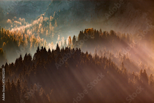sun-rays through misty pine forest autumn nature background Fototapete