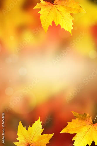 Background with group autumn orange leaves. Outdoor.