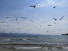 Seagulls Flying Over The Beach...