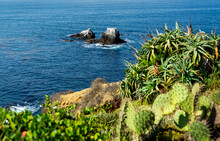 Beautiful Ocean Views With Defocused Cacti In The Foreground On A Cliff, And Seal Rock With Perched Shorebirds In The Distance In Laguna Beach, California.