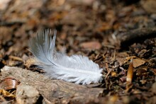 A Delicate White Fluffy Bird Feathers On The Ground