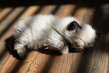White Furry Kitten Sleeping