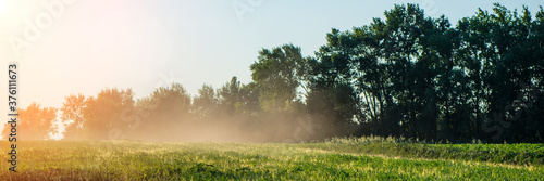 Vászonkép wind carries dust against the background of the forest in the field