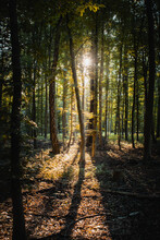 Beautiful Dreamy Sunset Sunt Light In A Green Fresh Summer Forest With Warm Light. Realx In The Calm Woods And Get Some Natural Energy. Peaceful And Realx Nature Scene